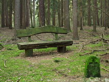 Wooden bench in fir tree forest Stock Photo