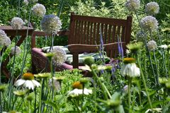 Flower garden and wooden bench. Wooden bench in the flowers border royalty free stock image
