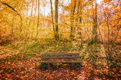 Wooden bench in a forest in autumn. Golden colors royalty free stock image