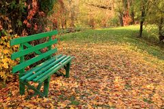 Wooden bench in forest on background of colorful autumn leaves. Stock Photos