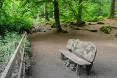 Wooden bench in the forest clearing Stock Photo