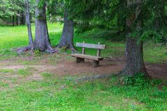 Wooden bench in the forest among coniferous trees and grass.  stock photos