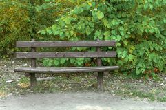 Wooden bench in the forest with green leaf background. Close Stock Photo