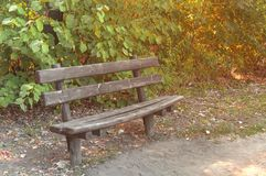 Wooden bench in the forest with green leaf background. Close Royalty Free Stock Photo
