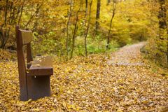 Wooden bench at a forest path in the autumn forest.  Royalty Free Stock Photography