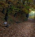 Wooden bench on a forest trail. In autumn in Eastern Europe Stock Image