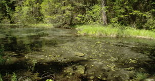 Wooden bench found beside the spring water 4K FS700 Odyssey 7Q. Wooden long bench found beside the spring water in the middle of the woods 4K FS700 Odyssey 7Q stock footage