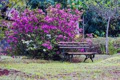 Wooden bench in front of a azalea bush in the garden. Photo of Wooden bench in front of a azalea bush in the garden royalty free stock photos