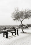Wooden bench in front of the seashore. Stock Photos