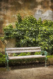 Wooden bench in front of a weathered wall with ivy Royalty Free Stock Photography