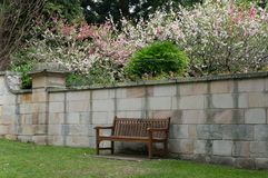 Wooden bench in a garden with blooming sakuras on the background. Springtime nature scene stock photography