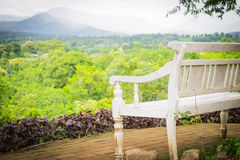 Wooden Bench in the garden Royalty Free Stock Photo