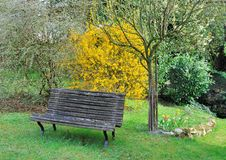 Wooden bench in garden Royalty Free Stock Images