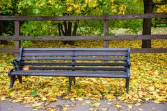 Wooden bench and grass covered with autumn golden leaves with wooden fence and green trees and bushes on background in the park royalty free stock image