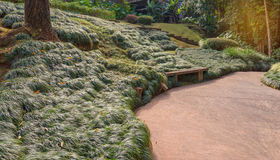 Wooden bench with grass in the parkwooden bench with grass Royalty Free Stock Images