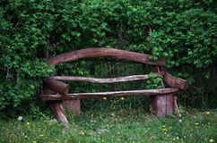 A wooden bench in a green forest. Stock Photo