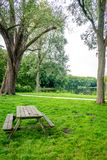 Wooden bench on green grass at Haagse Bos, forest in The Hague Stock Photography