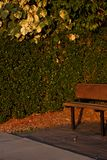 A wooden bench and a green hedge behind. In Queensland in Australia outdoors summer nature relaxing season plant bush landscape grass leaf day park walking royalty free stock photography