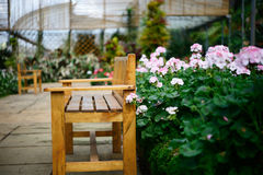 Wooden bench in greenhouse Stock Images