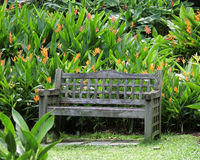 Wooden Bench among Heliconiaceae Hort. Singapore - August 2016 A weathered wooden garden bench set among the heliconiaceae hrt in the Singapore Botanic Gardens Stock Image