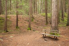 Wooden bench inside a forest, no people around Royalty Free Stock Photo