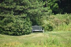 Wooden Bench in Landscape. Front side of empty wooden bench in Forest and Gardenn stock image