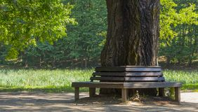 Wooden bench on a lawn with green grass Stock Images