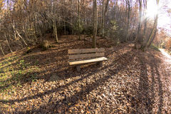 Wooden bench in lush autumn forest Royalty Free Stock Photography