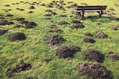 Wooden bench and many molehills in spring. A wooden bench and many molehills in the grass in the park in the beautiful spring stock photo