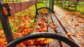 Wooden bench on national park near Skopje Stock Photography