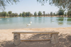 Wooden bench near beautiful lake with swimming birds Stock Image
