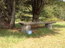 Wooden bench. Nestled in front of two pine trees stock photos