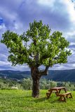 Wooden bench next to a tree. Concept of place to relax. Wooden bench next to a tree. Tuscany Italy. Concept of place to relax royalty free stock images