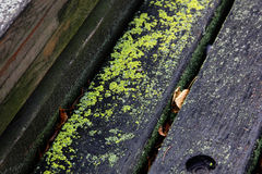 Wooden bench overgrown with moss. Near the town Royalty Free Stock Image