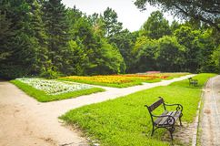 Wooden bench in the park. With beautiful flowers and trees Stock Image