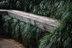 Wooden bench on a park. With green grass Stock Images