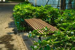 Wooden bench in the park at night with green tree surrounding Royalty Free Stock Photography