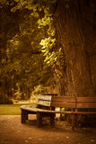 Wooden bench in park Royalty Free Stock Photos