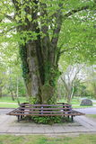 Wooden bench. A wooden bench in a park roundly a tree Stock Photography