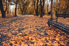 Wooden bench in a park with yellow leaves. Old wooden bench in a beautiful park with yellow leaves stock photography