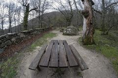 Wooden bench for a picnic, in an oak forest. Photographed with wide angle stock image