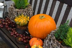 Wooden bench with pumpkins and chestnuts royalty free stock images
