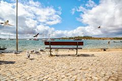 Wooden bench and seagulls. In the Portuguese town Alvor Royalty Free Stock Images