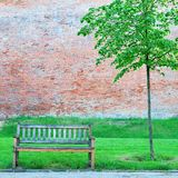 Wooden bench and small lonely tree Royalty Free Stock Photo