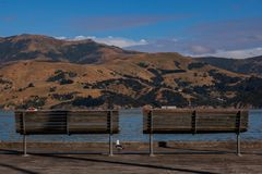 Seagull enjoying the view of the Akaroa bay with two benches stock images