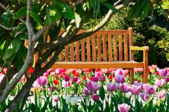 Wooden bench in spring Stock Photography