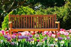 Wooden bench in spring Royalty Free Stock Image