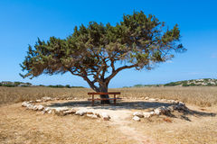 Wooden bench and alone tree against the sky Stock Photos