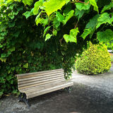 Wooden bench in summer garden Royalty Free Stock Images