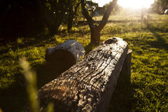 Wooden bench in the sun Stock Images